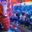 Sea Life Jesolo: il Natale ecologico