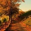 Parco Giardino Sigurtà: 11 novembre ultimo giorno di apertura stagionale