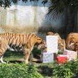 Zoom Torino: il compleanno delle Tigri